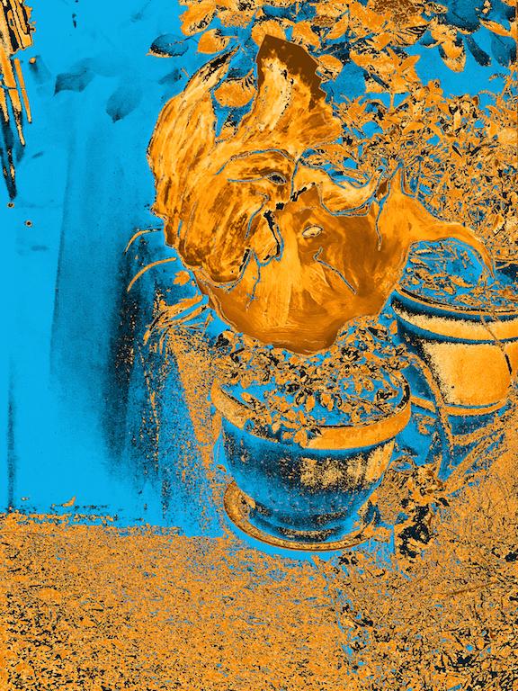 FLORES - Ao longo das pedras irregulares do calçamento passam ventando umas folhas amarelas em pânico.. - 2020.  TAMANHO DAS IMPRESSÕES DISPONÍVEIS - 20 x 30cm / 30 x 45cm / 40 x 60cm / 50 x 75cm / 60 x 90cm / 70 x 110cm / 100 x 100cm. Papel Hahnemuhle Studio Enhanced 210g, Impresso com pigmento mineral. ( Valores Sob Consulta : marquesdiera@gmail.com )